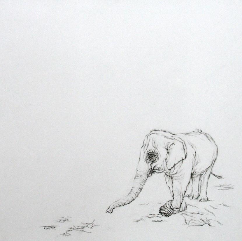 | 2013 | graphite and conte on mylar | 51 cm x 51 cm |
