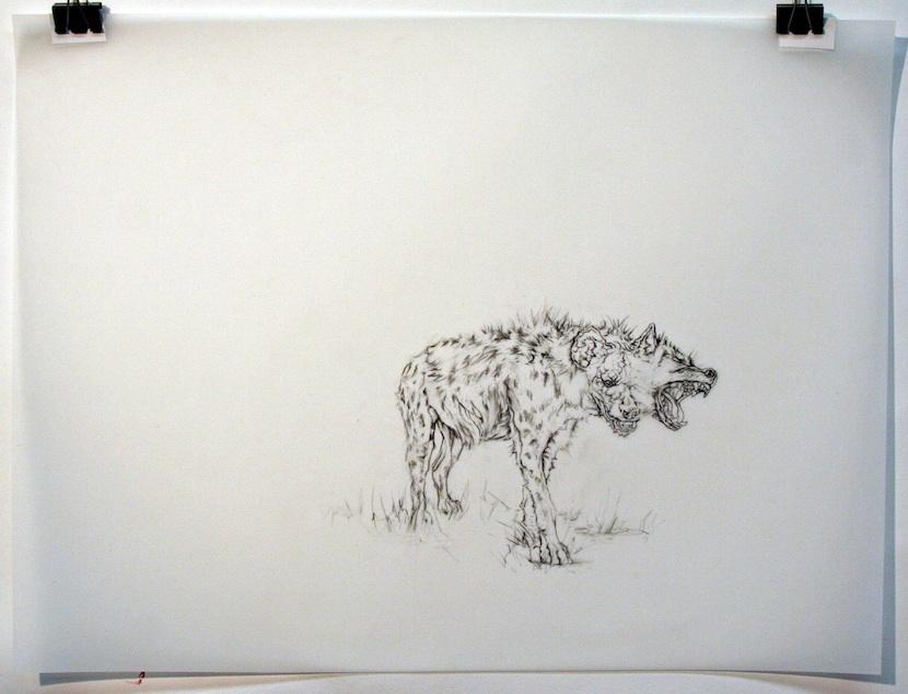 | 2012 | graphite and conte on mylar | 51cm x 61cm